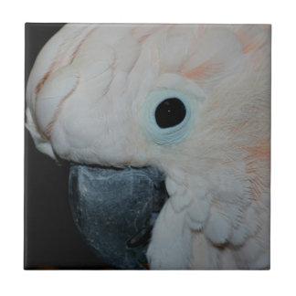 Carreau Animal moluquois rose de perroquet de cacatoès