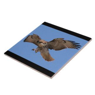 Carreau Animaux de faune de Raptor d'oiseau de faucon