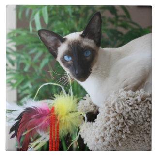 Carreau Beau chat siamois jouant avec le jouet