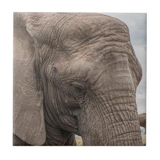 Carreau Beau plan rapproché d'éléphant africain