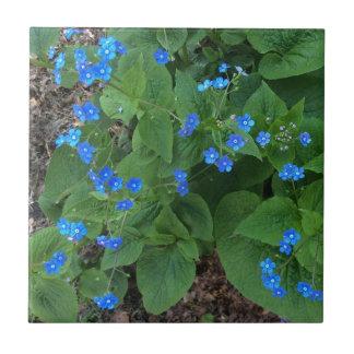 Carreau Bugloss sibérien - bleu et vert -