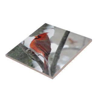 Carreau Cardinal masculin pendant l'hiver