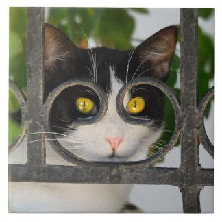 Carreau Chat curieux avec la monture de lunettes drôle -