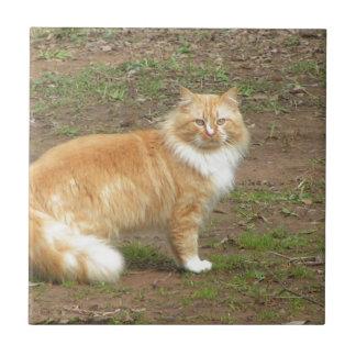 Carreau Chat orange et blanc velu