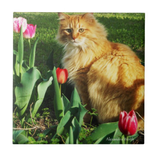 Carreau Chat parmi la tuile de tulipes