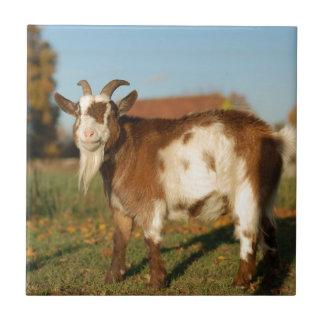 Carreau Chèvre rouge