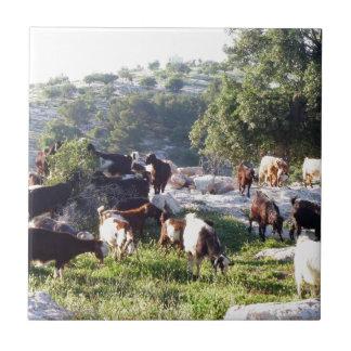 Carreau Chèvres
