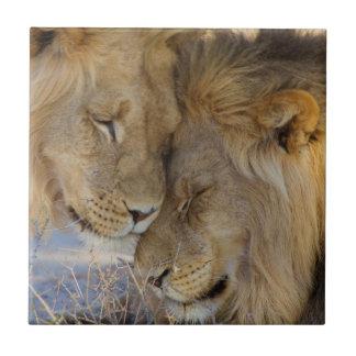 Carreau Deux lions se frottant