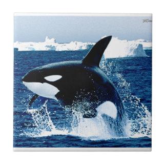 Carreau Éclaboussure de baleine