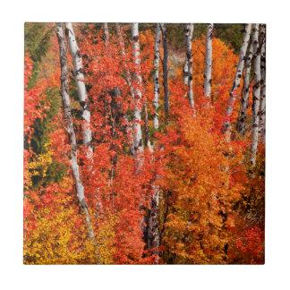 Carreau Érable rouge (Acer Rubra) et trembles
