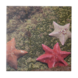 Carreau Étoiles de mer vivantes (4).JPG