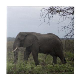 Carreau Faune PhotoTile d'éléphant africain