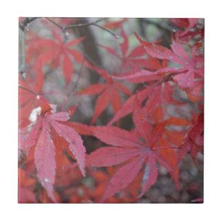 Carreau feuille d'érable rouge