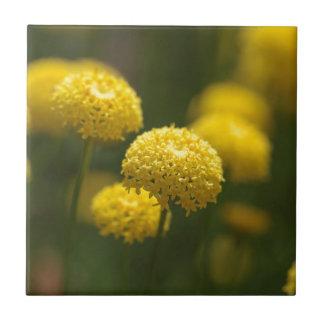 Carreau Fleurs de rosmarinifolia de Santolina