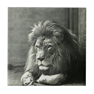 Carreau Illustration de lion