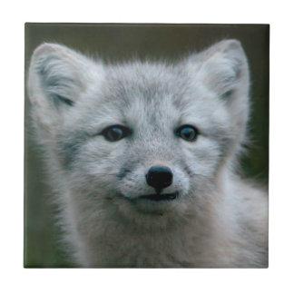 Carreau Kit de Fox arctique des images | de Getty