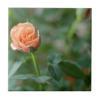 Carreau La miniature s'est levée dans le rose couleur