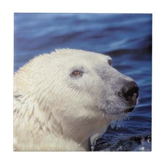 Carreau L'Amérique du Nord, cercle arctique. Ours blanc