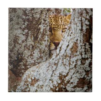 Carreau Léopard (Panthera Pardus) se cachant derrière