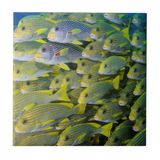 Carreau L'Indonésie. Instruction des poissons