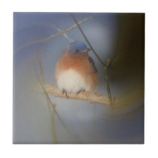 Carreau Nature d'oiseau bleu d'hiver
