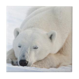 Carreau Ours blanc en hiver