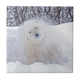 Carreau Ours blanc secouant la neige sur la toundra
