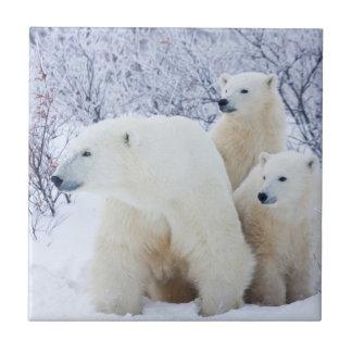 Carreau Ours blancs et deux petits animaux