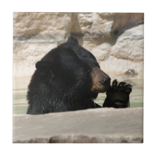 Carreau Ours noir appréciant une immersion fraîche