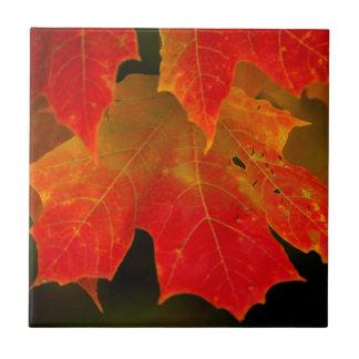 Carreau Parc d'état d'Itasca, couleurs 2 d'automne