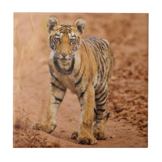 Carreau Petit animal de tigre royal de Bengale sur le