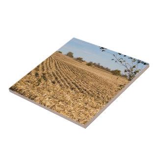 Carreau Photo de panorama de champ de maïs de l'Iowa sur