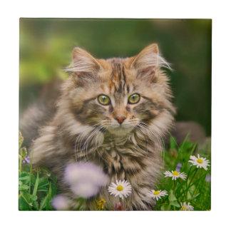 Carreau Photo pelucheuse mignonne d'animal de chat de