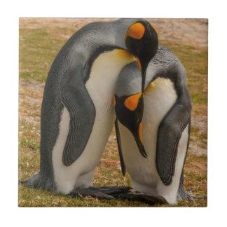 Carreau Pingouins de roi caressant, les Malouines