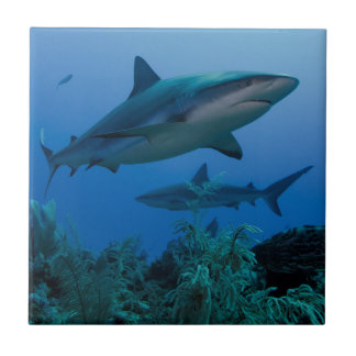 Carreau Récif des Caraïbes Shark Jardines de la Reina