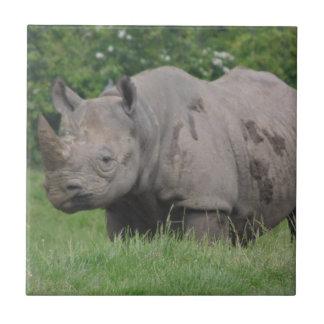 Carreau Rhinocéros gris dans le sauvage