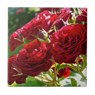 Carreau Roses rouges