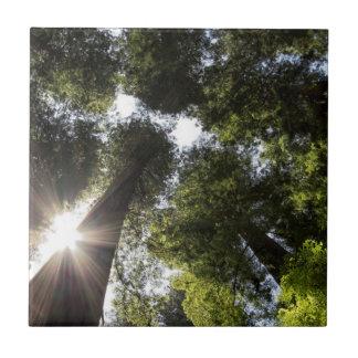Carreau Séquoias, parc d'état de séquoias de Humboldt