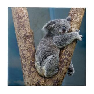 Carreau Sommeils d'ours de koala étreignant un arbre