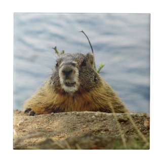 Carreau Spokane Marmot faisant une pointe au-dessus des