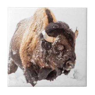 Carreau Taureau de bison forageant dans la neige profonde