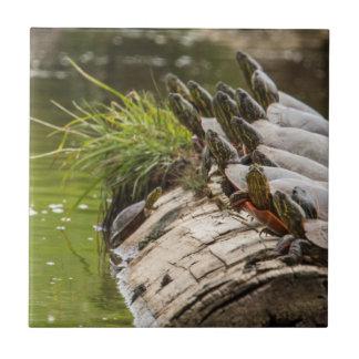 Carreau Tortues peintes s'exposant au soleil dans un étang