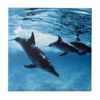 Carreau Trio des dauphins