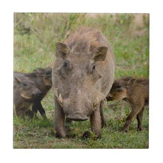 Carreau Trois porcelets de Warthog allaitent sur leur mère