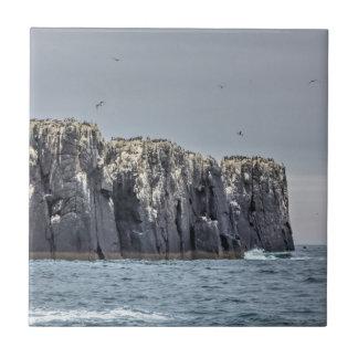Carreau Tuile carrée de falaises d'îles de Farne petite