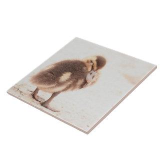 Carreau Tuile d'animaux de faune d'oiseau de canard de