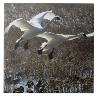 Carreau Tuile d'animaux de faune d'oiseaux de cygne de