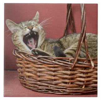 Carreau Tuile de baîllement de chat
