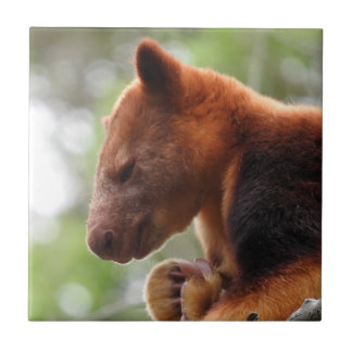 Carreau Tuile de kangourou d'arbre