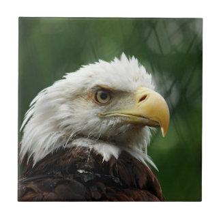 Carreau Tuile d'Eagle chauve